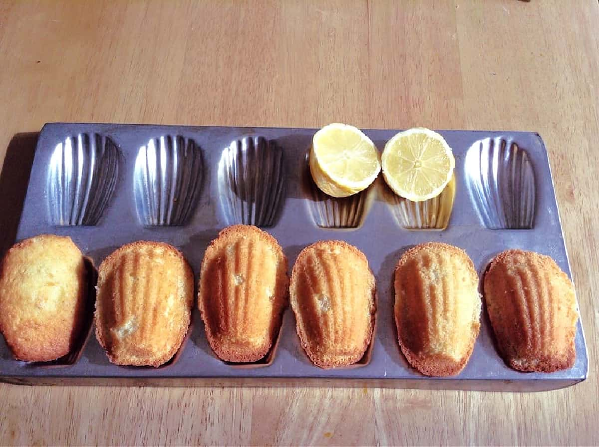 A row of shell-shaped madeleines in a pan.